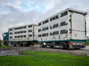 Tiertransporter unterwegs