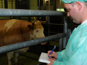 Control of animals at the abattoir